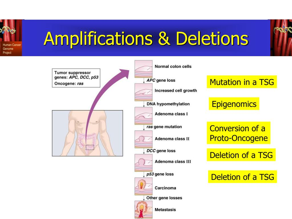 Amplifications & Deletions