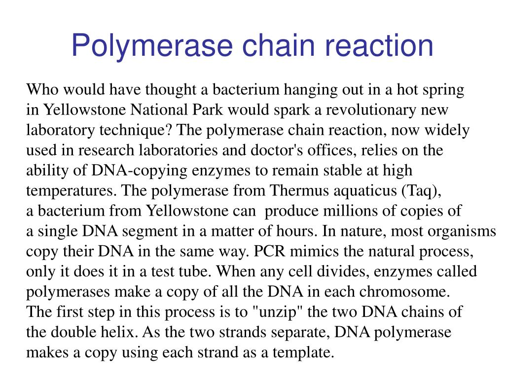 polymerase chain reaction l.