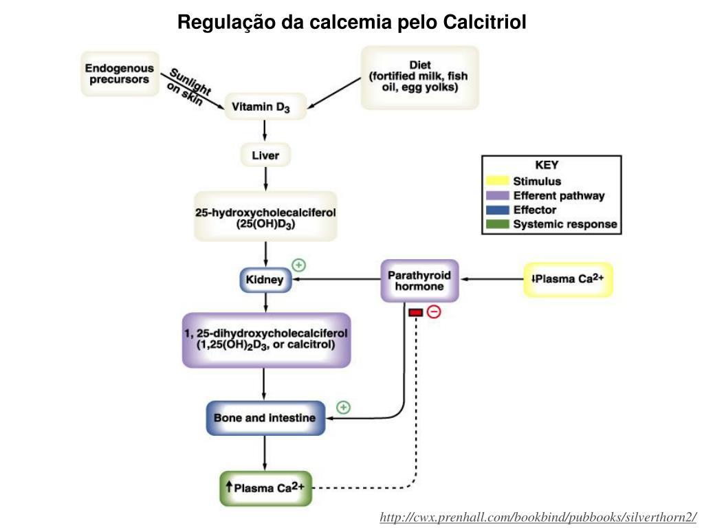 Regulação da calcemia pelo Calcitriol