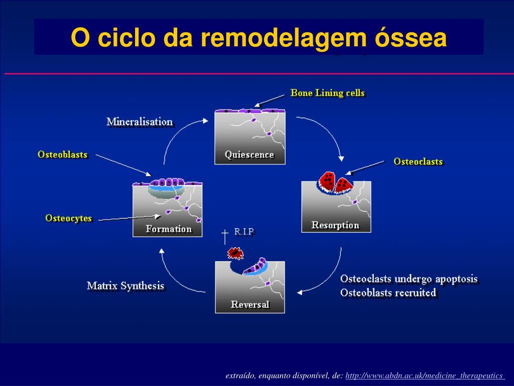 O ciclo da remodelagem óssea