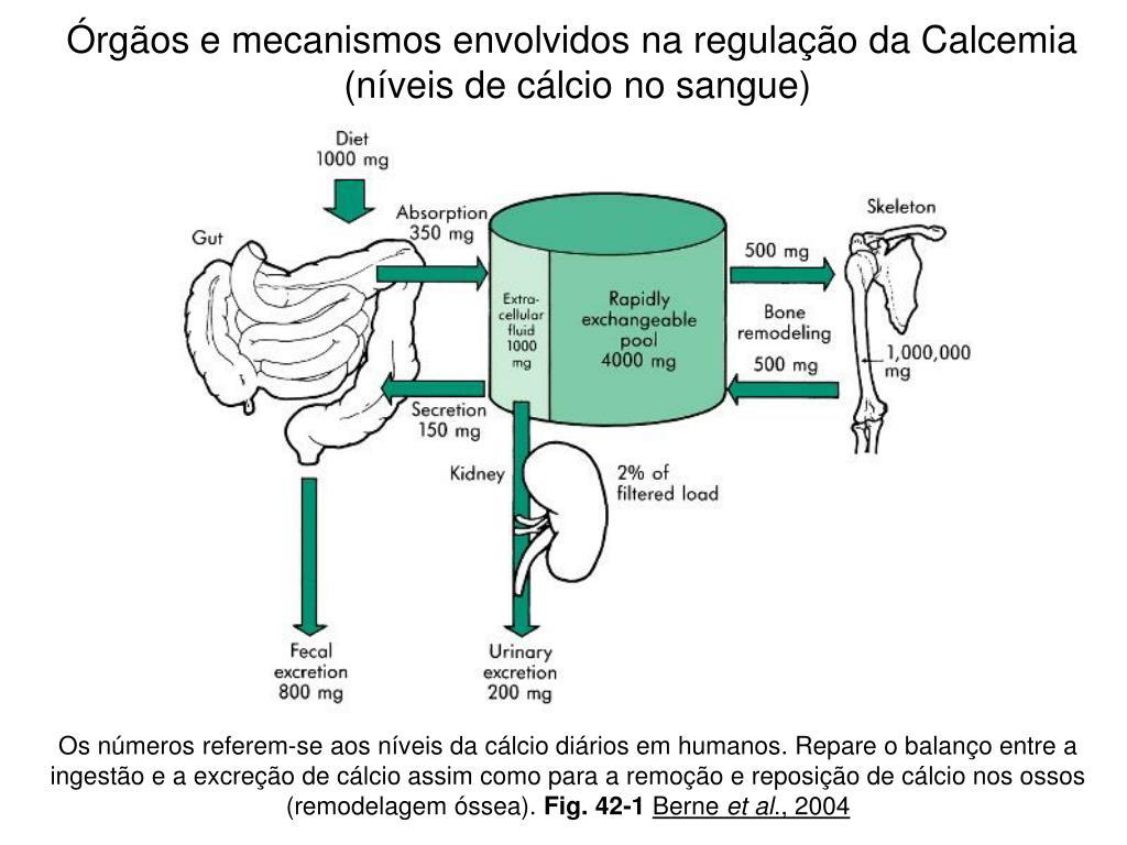 Órgãos e mecanismos envolvidos na regulação da Calcemia