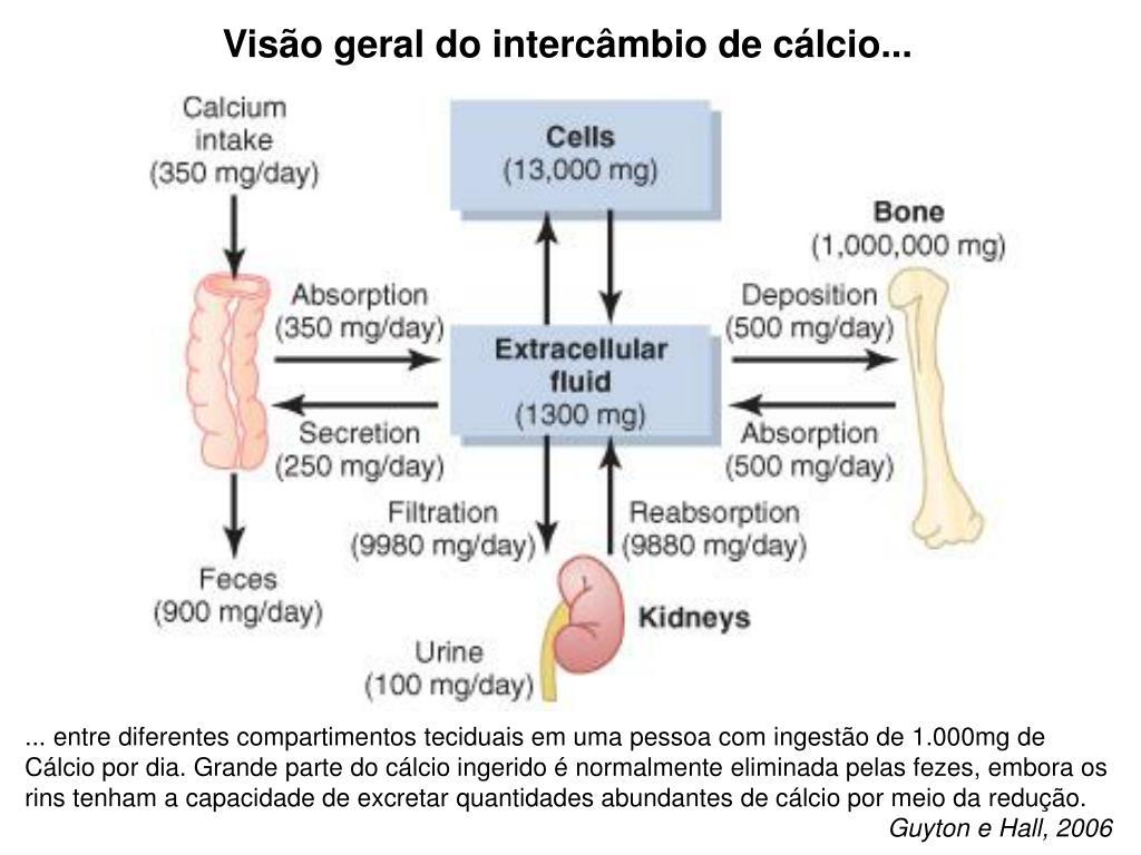 Visão geral do intercâmbio de cálcio...