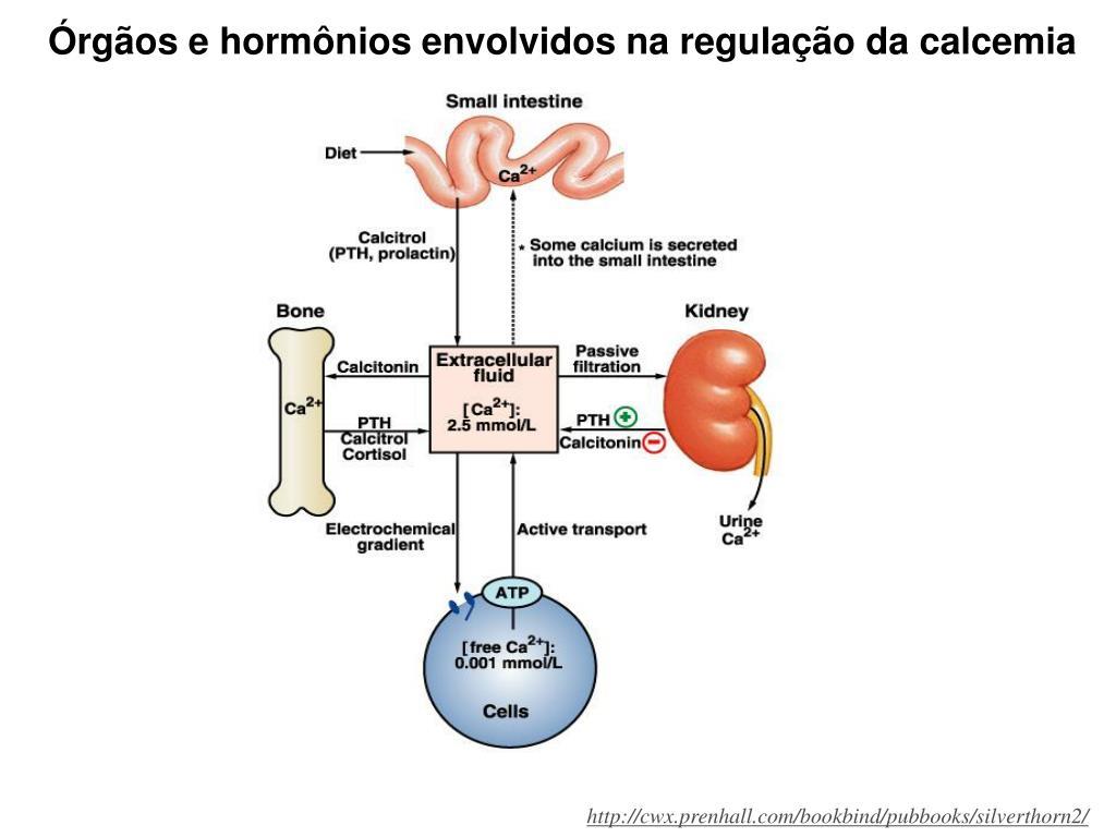 Órgãos e hormônios envolvidos na regulação da calcemia