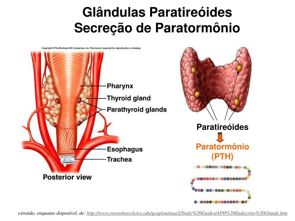 Paratireóides
