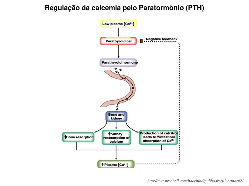 Regulação da calcemia pelo Paratormônio (PTH)