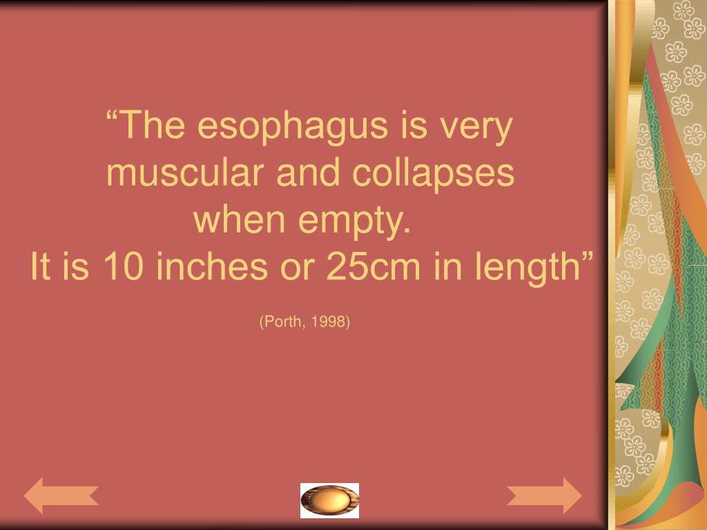 """""""The esophagus is very"""
