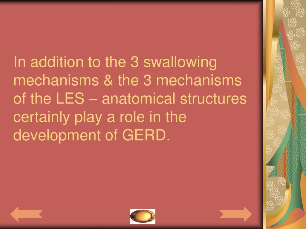 In addition to the 3 swallowing mechanisms & the 3 mechanisms of the LES – anatomical structures certainly play a role in the development of GERD.