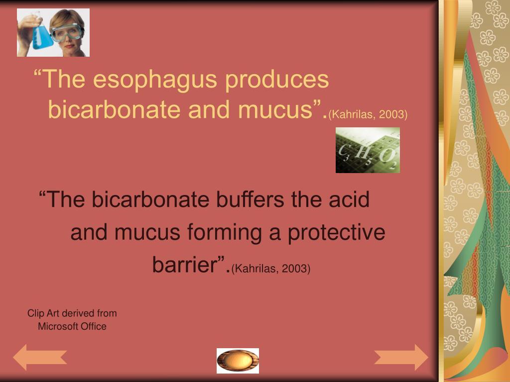 """""""The esophagus produces"""
