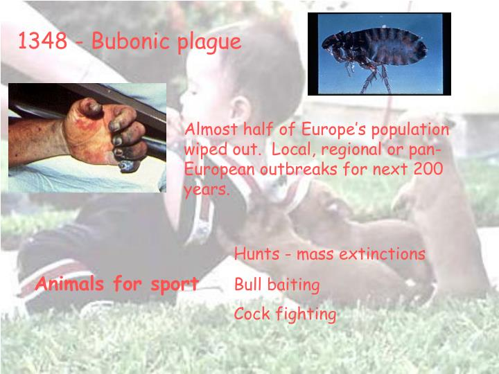1348 - Bubonic plague