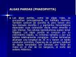 algas pardas phaeophyta