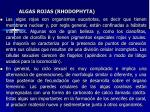 algas rojas rhodophyta