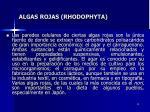 algas rojas rhodophyta12