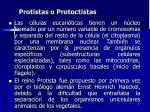 protistas o protoctistas3
