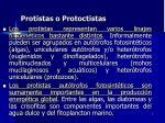protistas o protoctistas7