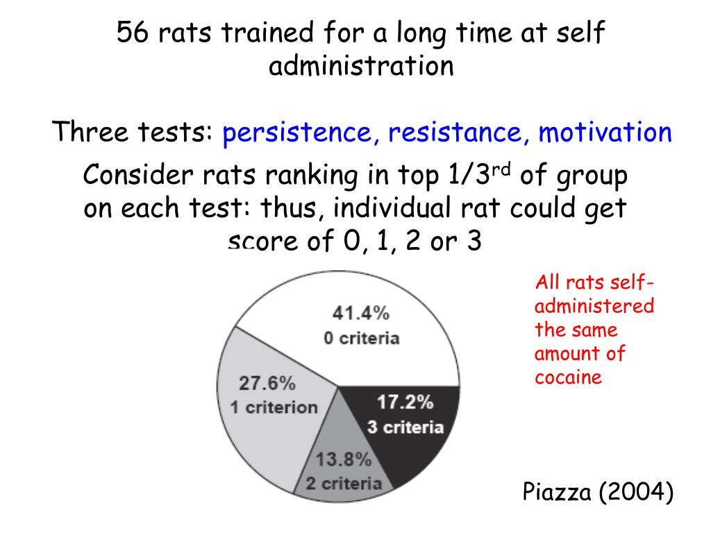 56 rats trained for a long time at self administration