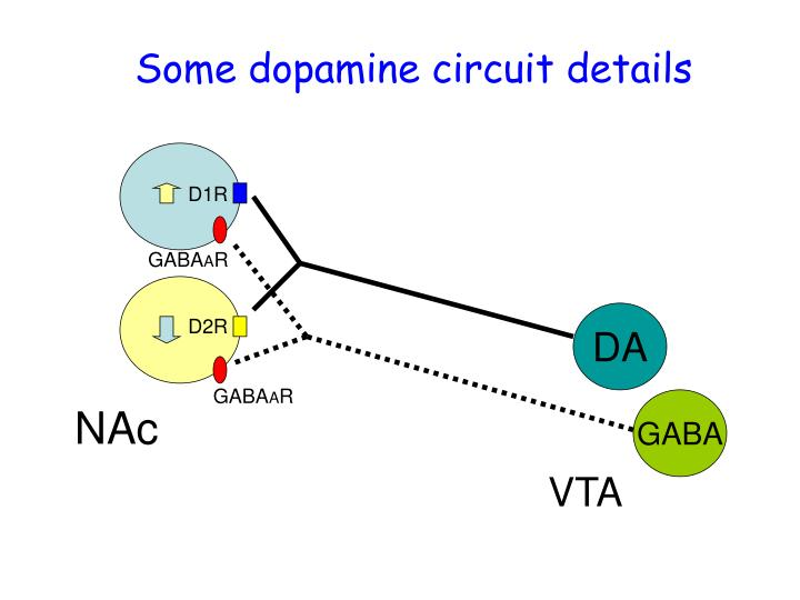 Some dopamine circuit details