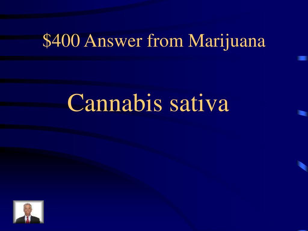 $400 Answer from Marijuana