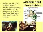 amphibia adult characteristics