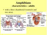 amphibians characteristics adults10