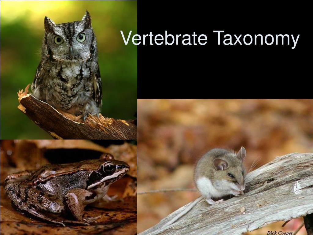vertebrate taxonomy l.