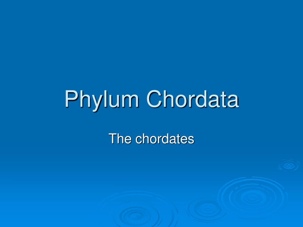 phylum chordata l.
