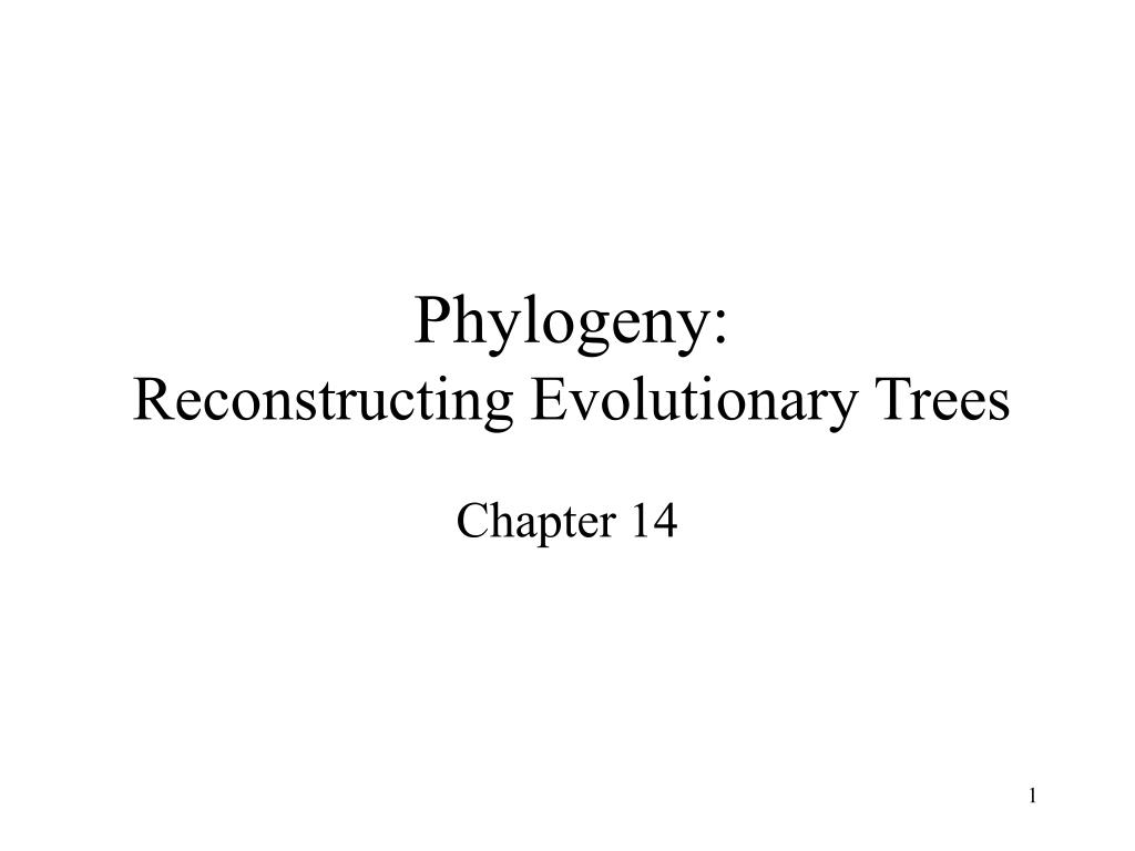 phylogeny reconstructing evolutionary trees l.
