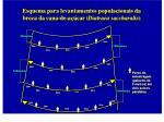 esquema para levantamentos populacionais da broca da cana de a car diatraea saccharalis25