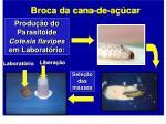 produ o do parasit ide cotesia flavipes em laborat rio