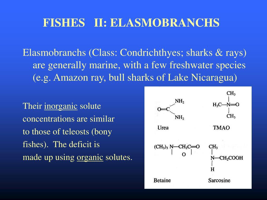 FISHES   II: ELASMOBRANCHS