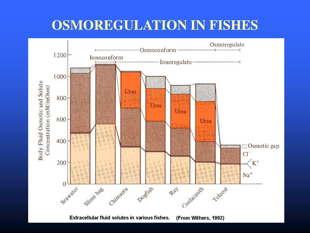 OSMOREGULATION IN FISHES