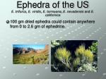 ephedra of the us e trifurca e viridis e torreyana e nevadensis and e californica