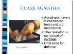 class agnatha9