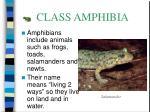 class amphibia24