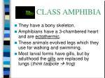 class amphibia25
