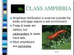 class amphibia28