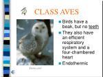 class aves50