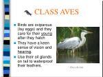 class aves51