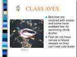 class aves52