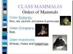 class mammalia orders of mammals