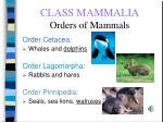 class mammalia orders of mammals67