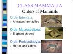 class mammalia orders of mammals68