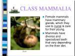 class mammalia56