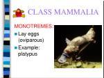 class mammalia59