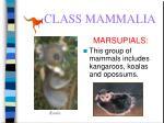 class mammalia60