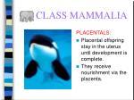 class mammalia62