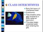 class osteichthyes18