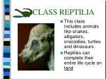 class reptilia31