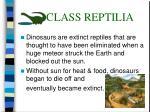 class reptilia32