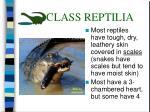 class reptilia35
