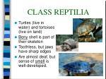 class reptilia38